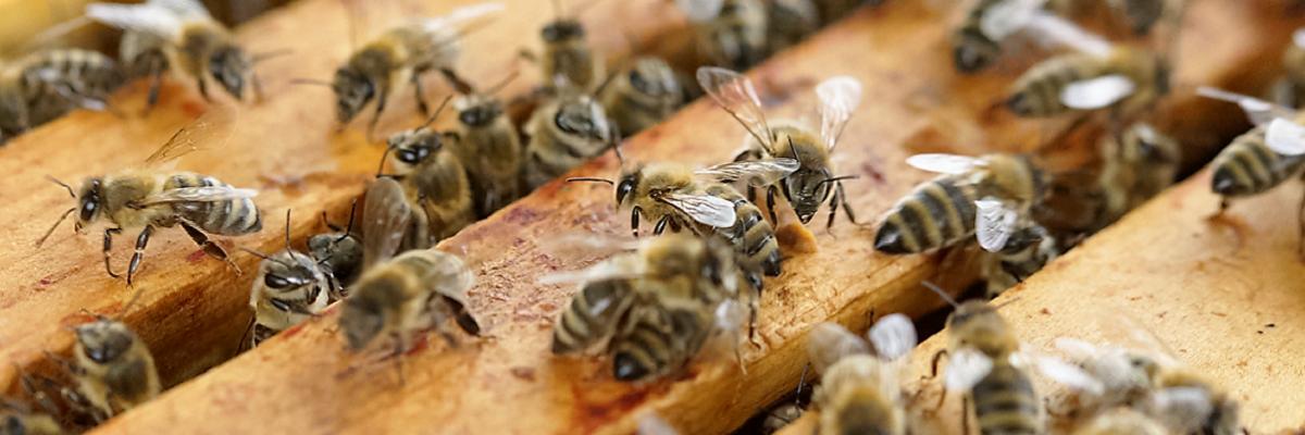 Permalink auf:unsere Bienen